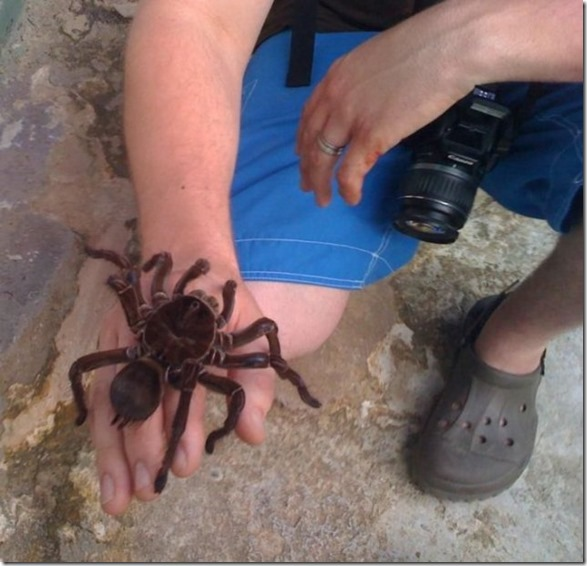 giant-largest-spider-13