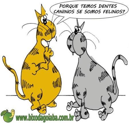 Dúvida odontológica veterinária