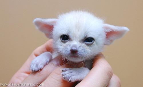 animais recem nascidos filhotes fofos desbaratinando (4)