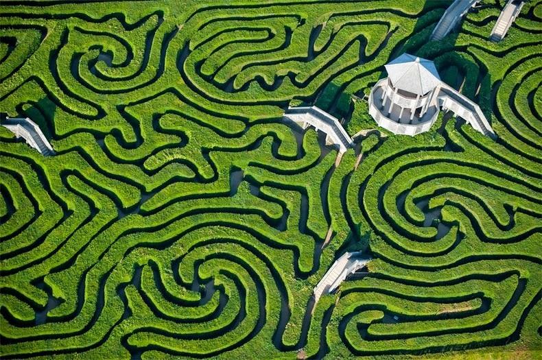 longleat-hedge-maze-8