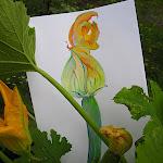 vegie_artworks_10 - 063.jpg