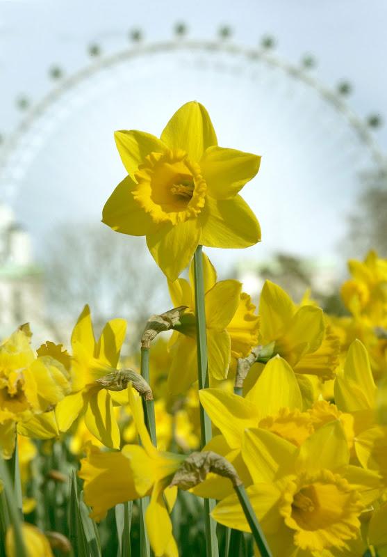 yellow_002.jpg