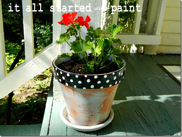 polka_dot_painted_pot_black_with_white_dots_planted