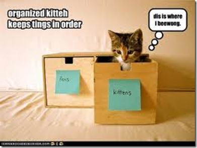 org kitten