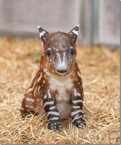 funny-animals-cute-28
