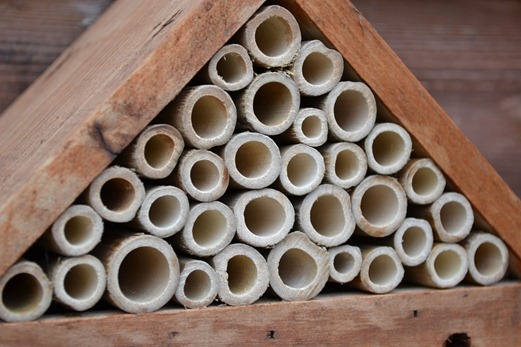 Pyramid for Leaf-cutter bees