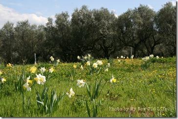La Selva i fiori 2