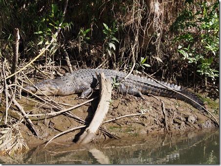 2 Croc iv V.iii