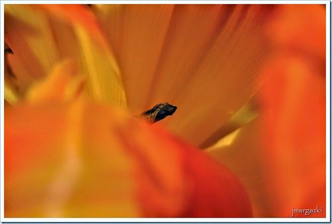 flores-buscando-su-lado-mas-intimo