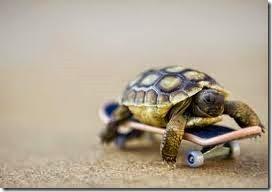 humor tortugas (42)