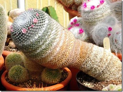 Cacti20-blog