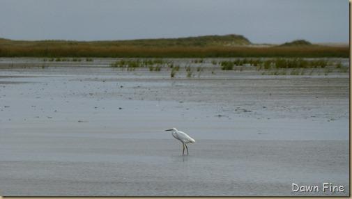 south beach bird trip_002