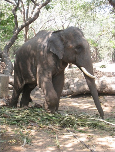 Elephant Sactuary II