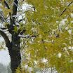 2013-sotosalbos-nieve7.jpg