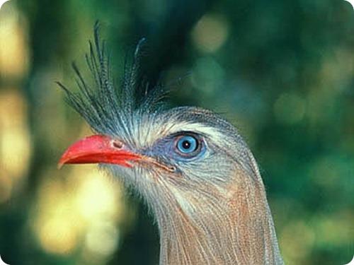 parque nacional el rey ave