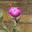 Ballı Bitkiler-1