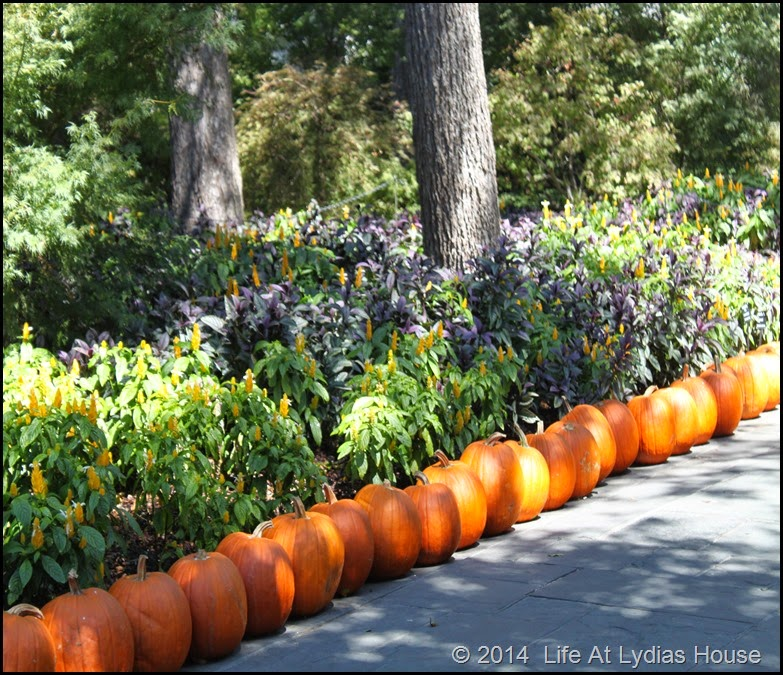 Dallas Arboretum - pumpkin festival-pumpkin walways 4