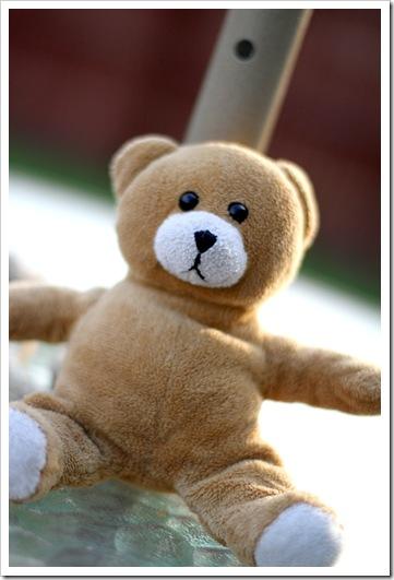 little teddy IMG_4365