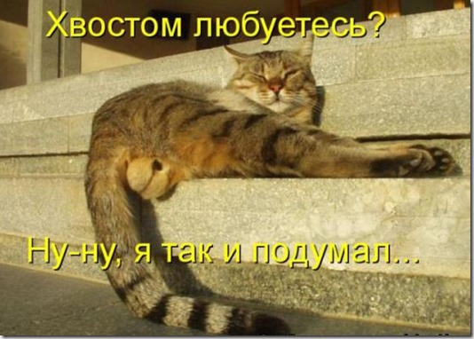 a65388cfdb9aa50786c16822bb2_prev