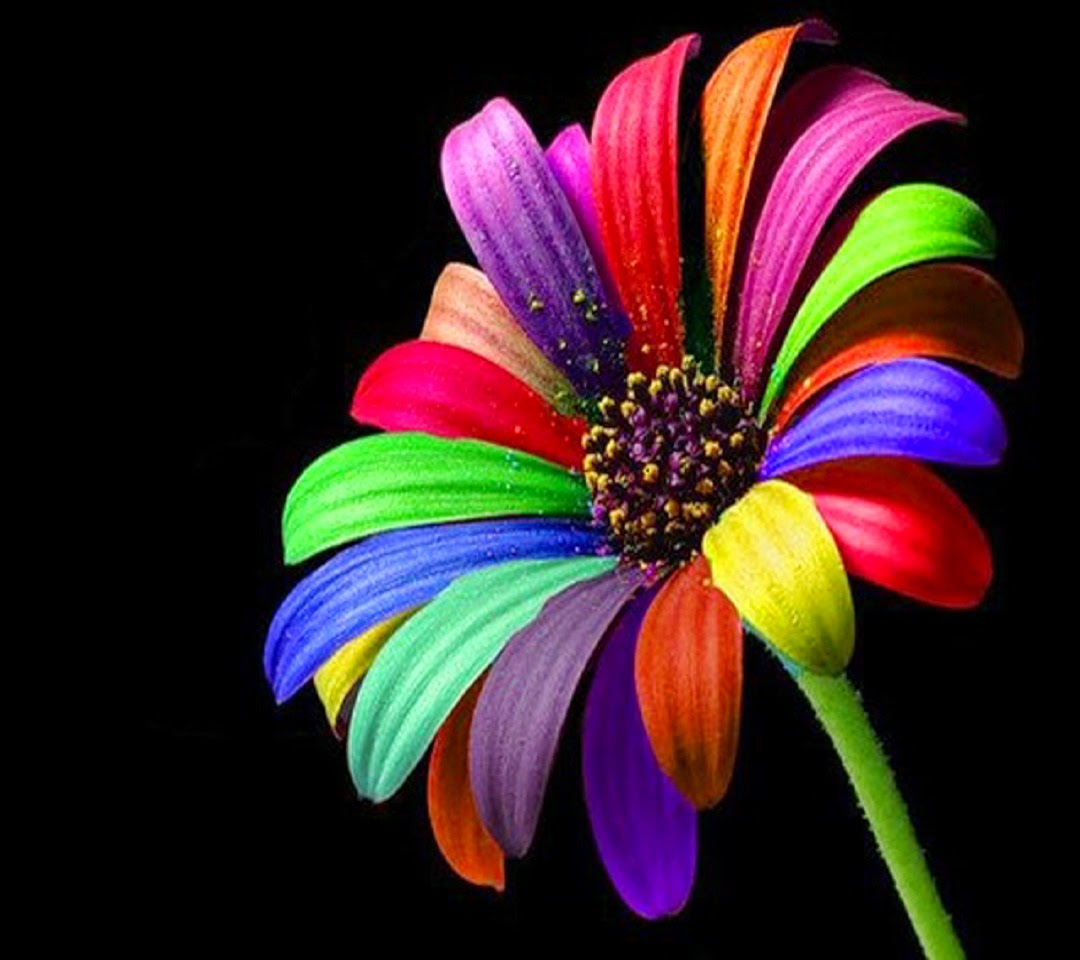 colourful images colourful backgrounds for pc full hd top