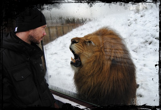 Damien vs Lionking