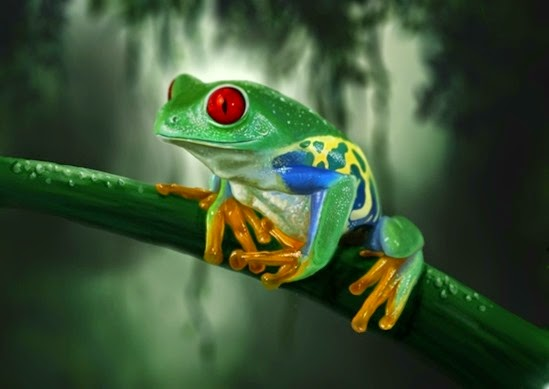 frogs redeyed tree frog amphibians 2000x1334 wallpaper_wallpaperswa.com_90