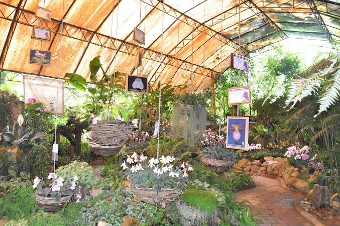 Imagini Thailanda: Gradina de orhidee de la Doi Tung, Thailanda