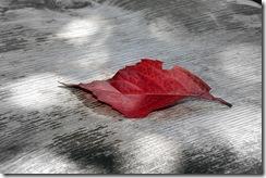 paisagem folha