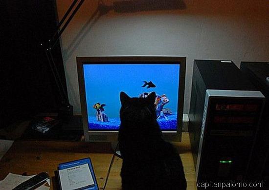 gatos en ordeandor  (5)
