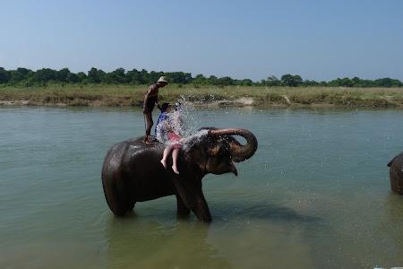 baie pe elefanti