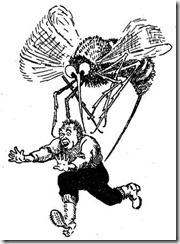 komarim1