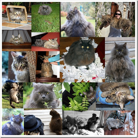 Коты 2011
