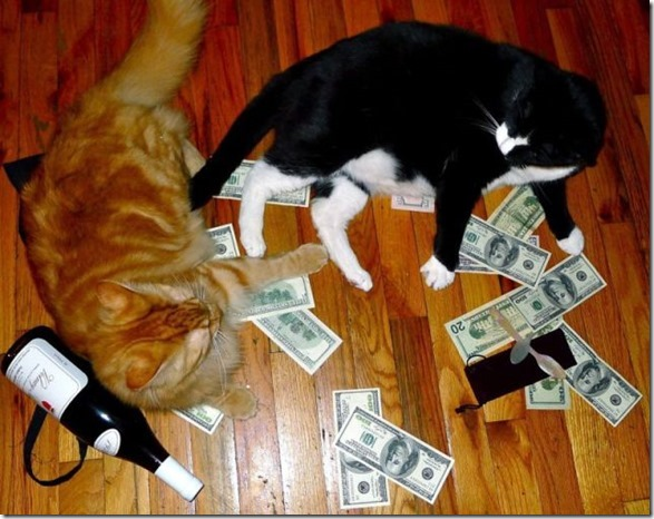 rich-wealthy-cats-11