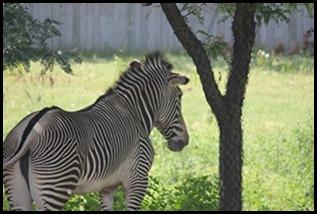 Zoo5 056
