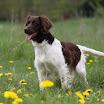 Honden » Fotoshoot Van 't Livinusbos