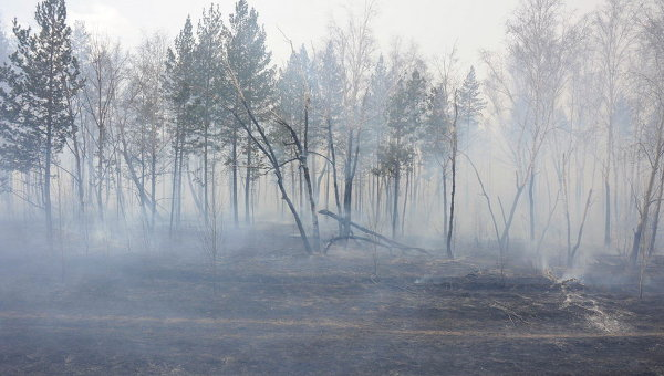 Smoke blankets a forest in Siberia after passage of wildfires, 28 August 2012. RIA Novosti