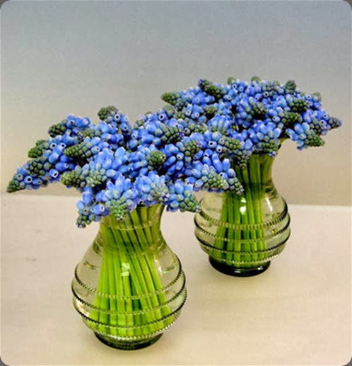 muscari michael george
