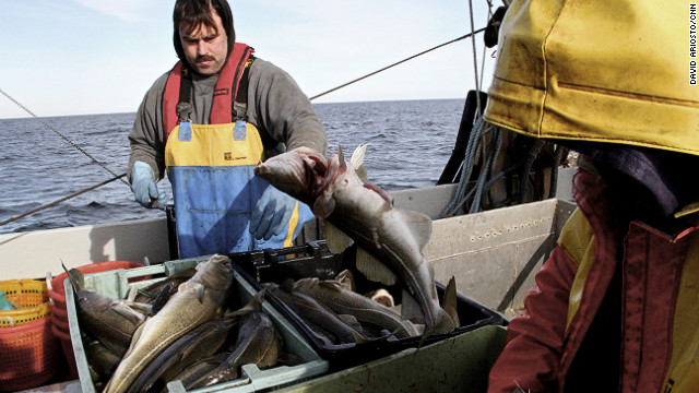 Dennis Robillard, left, and Kevon Hughes fish for cod off the coast of Massachusetts. On 30 January 2013, the New England Fishery Management Council recommended slashing cod catch rates by 77 percent in the Gulf of Maine. The council also voted to cut 55 percent of cod catch rates in Georges Bank Photo: David Ariosto / CNN