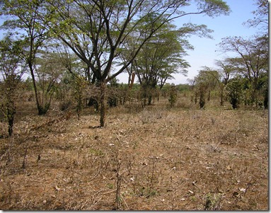 Former Coffee Block Mbono Farm - Copy