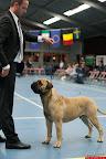 20130511-BMCN-Bullmastiff-Championship-Clubmatch-2144.jpg