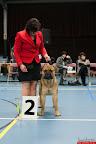 20130511-BMCN-Bullmastiff-Championship-Clubmatch-1904.jpg