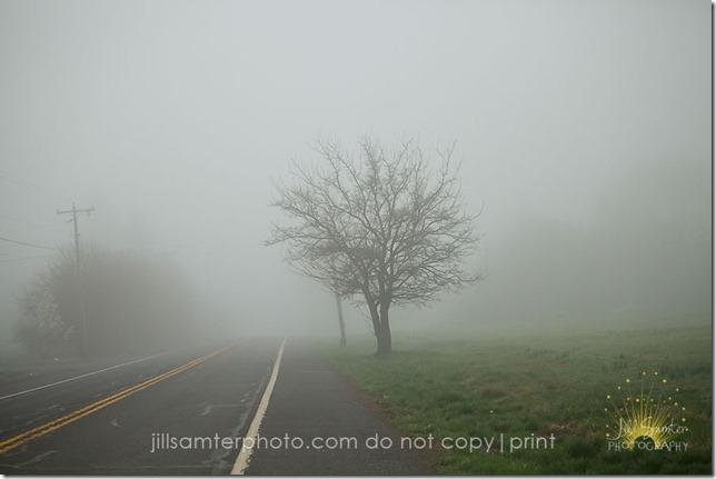 fog-5421