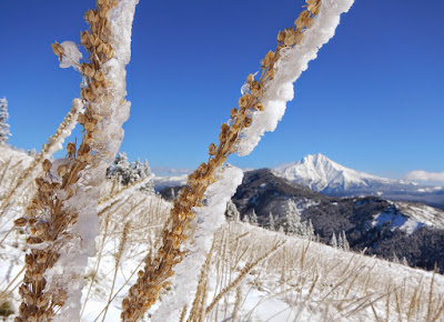 icy beargrass.JPG