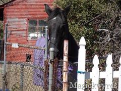 horse hello blog