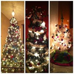 Christmas Trees 2012