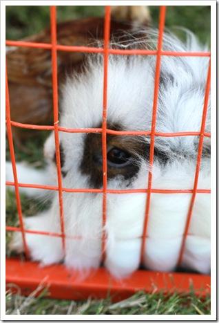 petting zoo IMG_9468