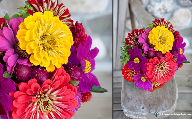 zinnias rabbat_photo1 flourish florals dot com