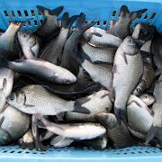 20121120e_2012度第2回三島湖へら鮒放流005.jpg