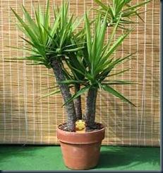 plantas-interior purificadoras