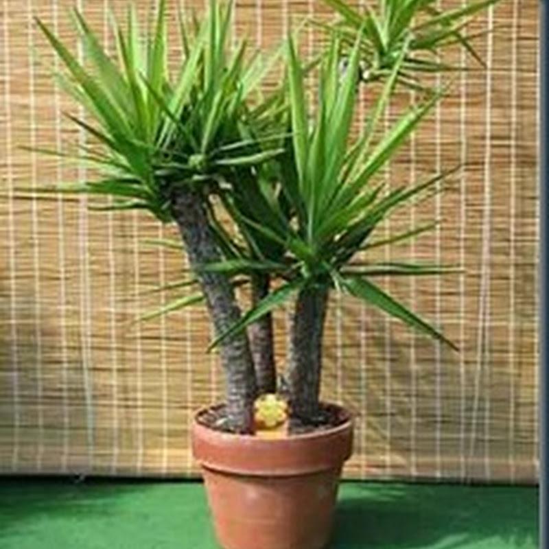 Plantas de interior podem aumentar a sua saúde